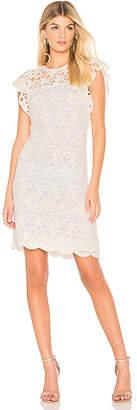 Velvet by Graham & Spencer Ally Dress