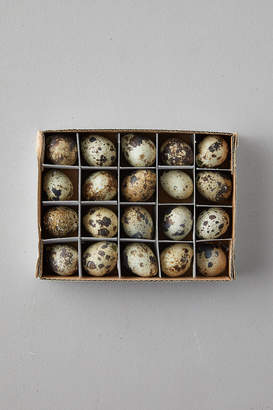 Anthropologie Quail Eggs, Set of 20