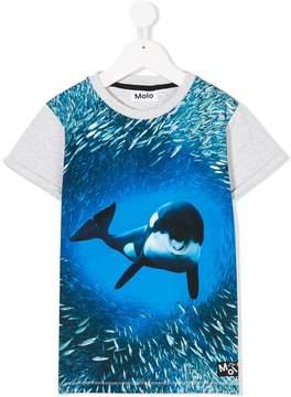 Molo dolphin-print T-shirt