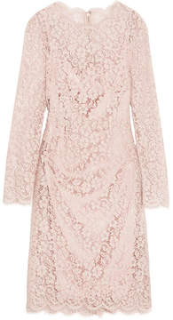 Dolce & Gabbana Corded Cotton-blend Lace Dress - Pastel pink