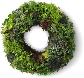 Lands' End Lands'end Fresh Succulent Wreath 14