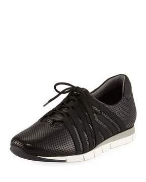 Sesto Meucci Calais Perforated Napa Leather Sneaker, Black