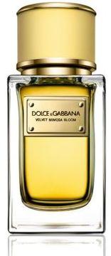 Dolce & Gabbana Velvet Mimosa Bloom/1.6 oz.