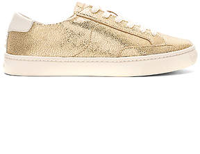 Soludos Metallic Lace Up Sneaker