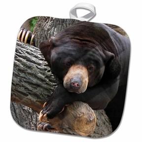 DAY Birger et Mikkelsen 3dRose Oh Man, What a Day, Black Bear - Pot Holder, 8 by 8-inch