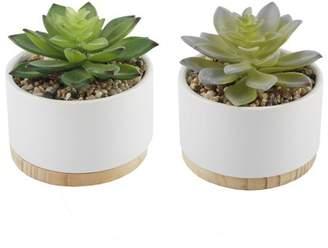George Oliver 2 Piece Succulent Plant in Pot Base