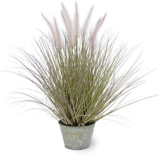 Beachcrest Home Dogtail Grass in Round Metal Pot