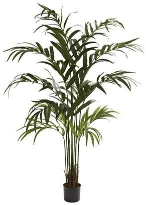 Bay Isle Home Kentia Palm Tree in Pot