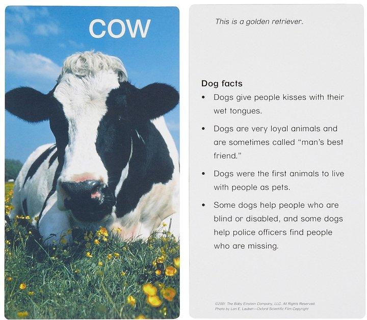 Harper Collins Baby Einstein: Animal Discovery Cards