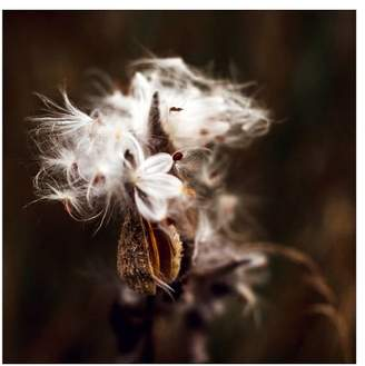 Pottery Barn Fall Milkweed Pod By Cindy Taylor