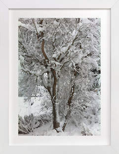 Snowy Willow Art Print
