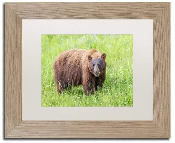 Trademark Fine Art Pierre Leclerc 'Cinnamon Bear' Matted Framed Art, Birch Frame, White