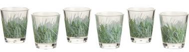 Set of Six Grass Acrylic Shot Glasses