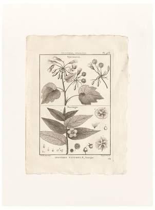 Pottery Barn Botanical Plate 468 Framed Print