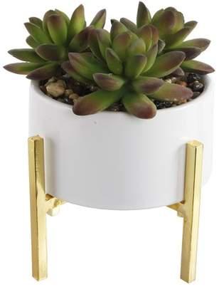 Ebern Designs Mix Stand Desktop Succulent Plant in Ceramic Pot Base