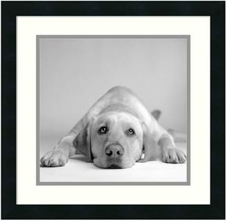 Amanti Art ''Tally'' Dog Framed Wall Art