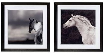 Susan Friedman Photography, Set of 2