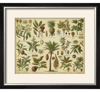 Wayfair 'Classification of Tropical Plants' Framed Graphic Art Print