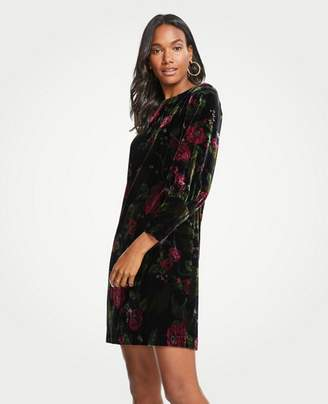 Ann Taylor Tall Cuffed Floral Velvet Shift Dress