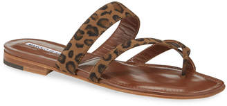 Manolo Blahnik Susa Leopard Flat Sandals