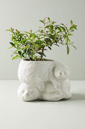 Anthropologie Sloth Garden Pot