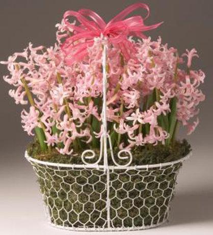 Pink Bulb Garden in Wire Basket