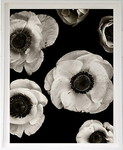 Anemones on Black - Dawn Wolfe 30