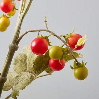 west elm Artificial Plants - Tomato Spray