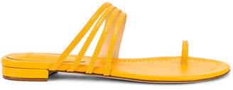 Alexandre Birman Strappy Flat Sandal in Sunflower | FWRD