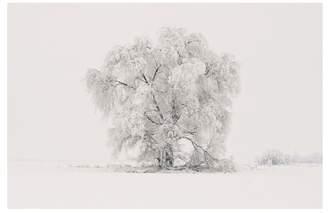 Pottery Barn Winter Tree Framed Print by Jennifer Meyers