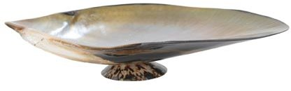 Jayson Home & Garden Natural Shell Dish