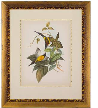 "John-Richard Collection Gould Birds of the Tropics II"" Giclee Wall Art"