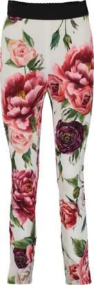 Dolce & Gabbana Floral Print Legging