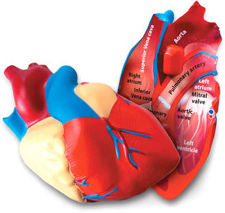 Learning Resources Inc Cross-Section Human Heart Model