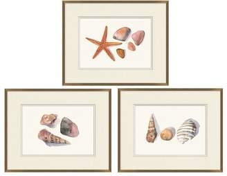 Pottery Barn Shell Collection Print
