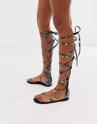 b2e79a189441 Asos Design DESIGN Fireworks knee high gladiator flat sandals in snake print