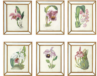 Twos Company Two's Company Orchidees Set of 6 Orchid Wall Art Prints in Mirror Frame with Antiqued Gold Trim