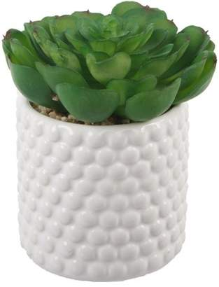 Ebern Designs Succulent Plant in Pot Base