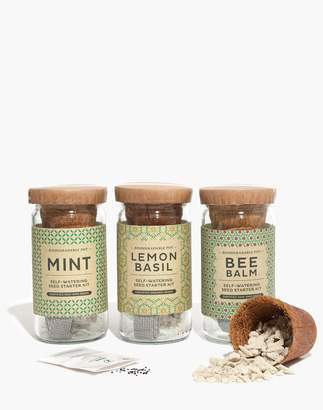 Madewell Modern Sprout Tea Eco Seed Starter Kit