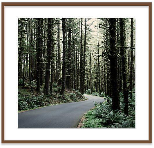 Ecola State Park Road - Christine Flynn - 47.5