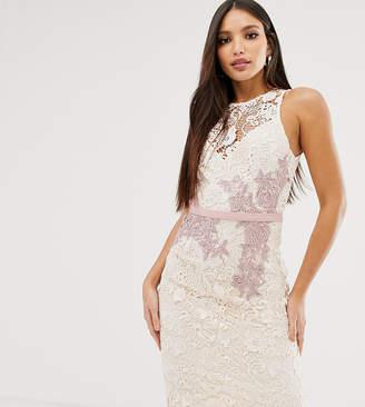 Little Mistress Tall contrast lace floral applique pencil dress in cream
