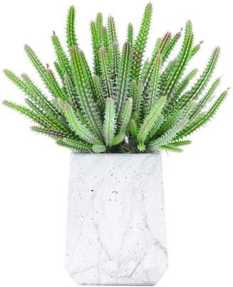 Creative Displays Finger Cactus In Marble Pot