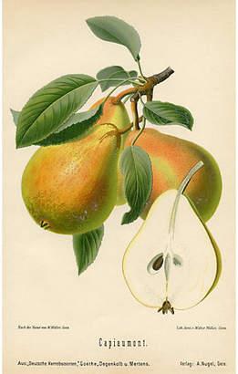 One Kings Lane Vintage German Pear Print - 1894