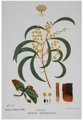 Maxwell & Williams Royal Botanic Garden Tea Towel 50x70cm Wattle