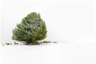 Ben Robson Hull Photography Shelter Print