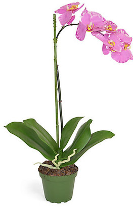 """19"""" Phalaenopsis Orchid Arrangement - Faux - The French Bee"""