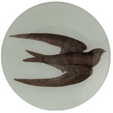 Swift Bird Plate