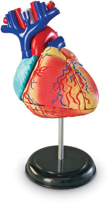 Learning Resources Inc Heart Anatomy Model