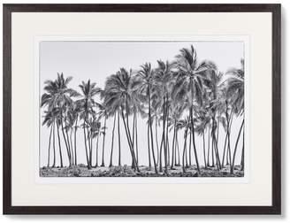 Williams-Sonoma Elizabeth Carmel Photography, Island Palms