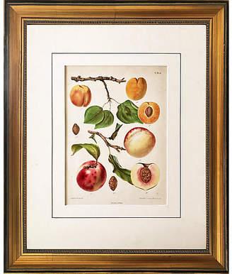 One Kings Lane Vintage 19th-C. Dutch Botanical Print of Peaches
